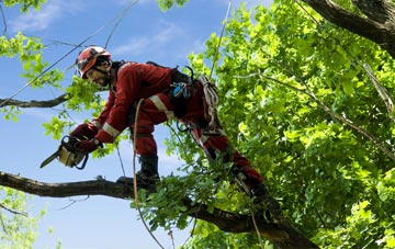find trusted rated Cardiff tree surgeons
