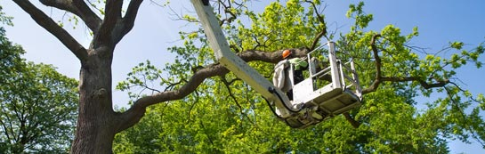 Cardiff tree surgery services