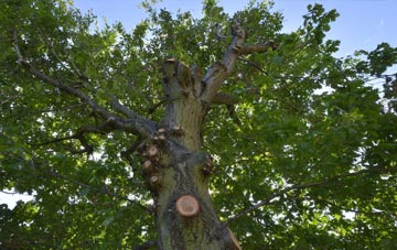 what is Cardiff tree surgery?